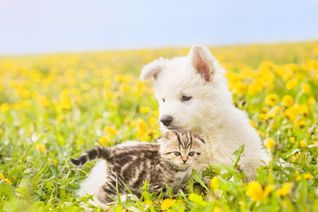 kitten and puppy lying together on summer field. Space for text.