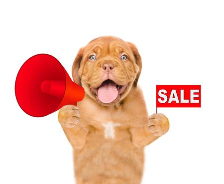 Happy dog holds megaphone and sales symbol. isolated on white background. Stock Photo