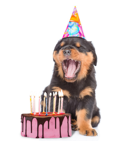 Puppy in birthday hat blows out the candles on the cake. isolated on white background.