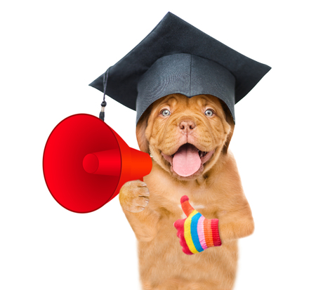 Graduated dog holds megaphone and showing thumbs up. isolated on white background.
