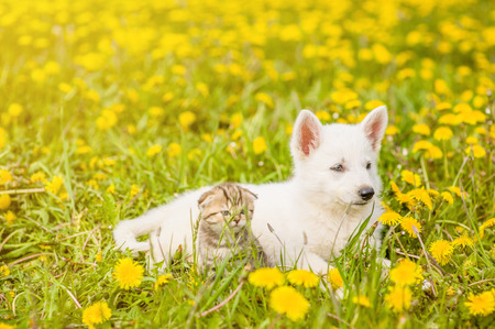 cat and dog lying together on a dandelion field. Space for text. Stock Photo