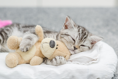 Cute baby kitten sleeping with toy bear.
