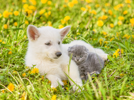 kitten lying with puppy on summer grass. Space for text.