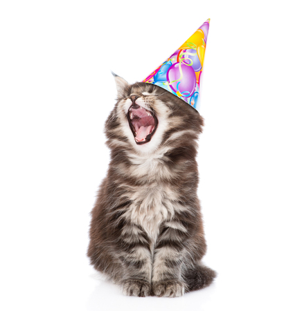 Yawning kitten in birthday hat. isolated on white background.