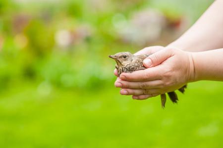 Baby catbird sitting in woman`s hand. Standard-Bild