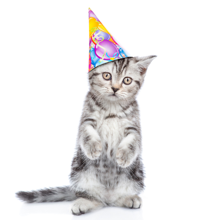 Cute kitten in birthday hat standong on hind legs. isolated on white background.