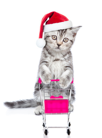 Tabby kitten in red christmas hat with shopping trolley looking at camera. isolated on white background.