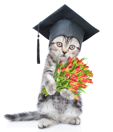 Graduated cat with bouquet of tulips. isolated on white background. Standard-Bild