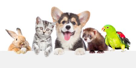 Groep huisdieren samen over witte banner. geïsoleerd op een witte achtergrond.