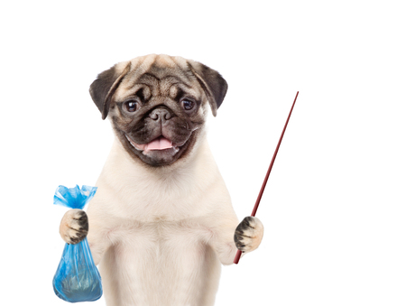 Puppy holds plastic bag and pointing stick. Concept cleaning up dog droppings. isolated on white background. Banque d'images