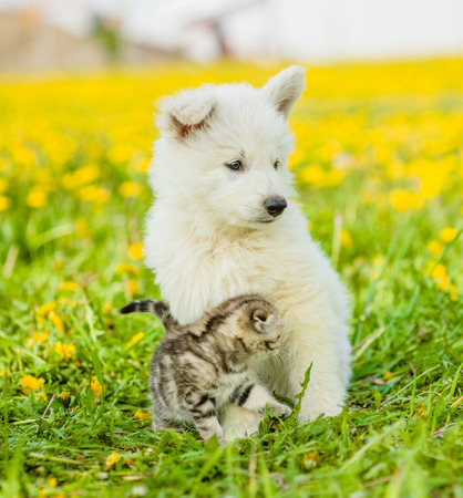 kitten and puppy together on a dandelion field. Stock Photo