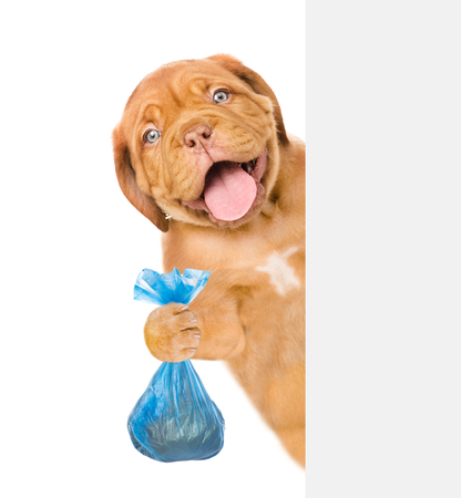 Puppy holds plastic bag behind white banner. Concept cleaning up dog droppings. isolated on white background.