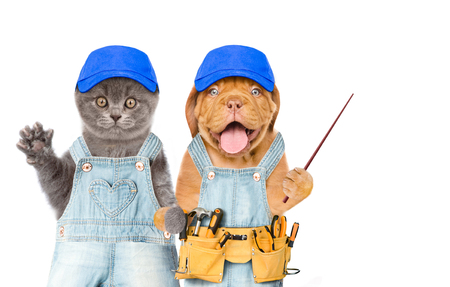 Funny kitten and puppy workers in blue hats with tool belt holds pointing stick. Isolated on white background. Space for text.