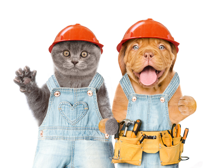 Funny kitten and puppy workers in hard hats with tool belt. Isolated on white background. Space for text.