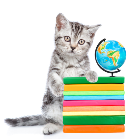 Cat standing on hind legs with books and globe looking at camera. isolated on white background.
