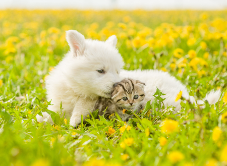 Puppy sniffing kitten on a green summer grass. Stock Photo