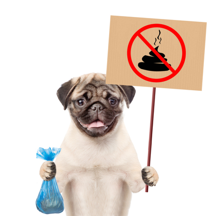 "puppy holds plastic bag and sign ""no dog poop"". Concept cleaning up dog droppings. isolated on white background."