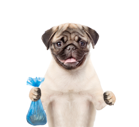 Puppy holds plastic bag. Concept cleaning up dog droppings. isolated on white background. Banque d'images - 107757929