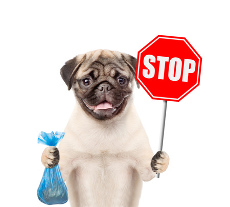 puppy holds plastic bag and road sign stop. Concept cleaning up dog droppings. isolated on white background.