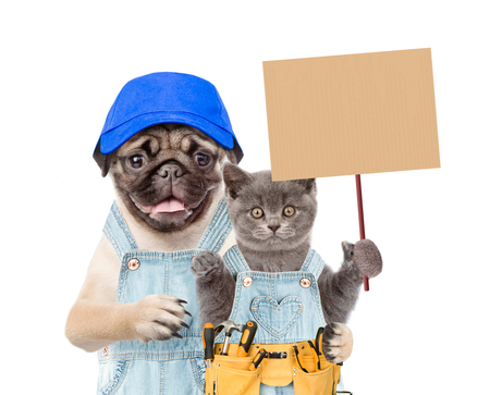 Funny puppy in blue cap and kitten worker with tool belt holding blank banner mock up on wood stick. isolated on white background.