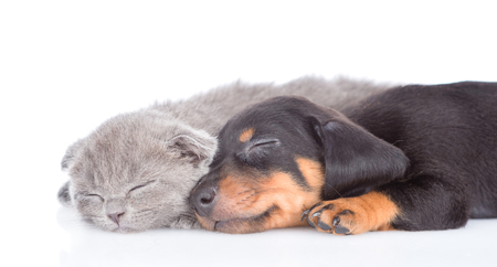 close up puppy and kitten are sleeping together.  isolated on white background.