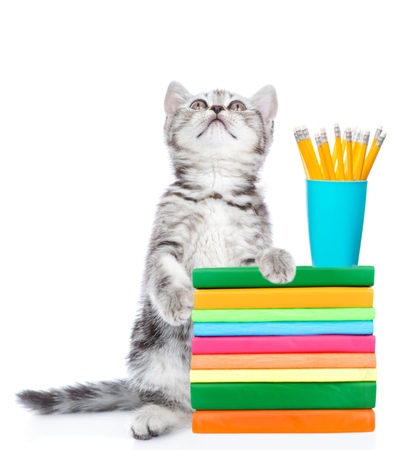Cat standing on hind legs with books and pencils looking up. isolated on white background.