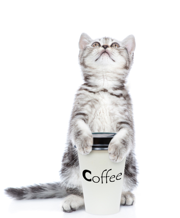 Cute kitten with a cup of coffee looking up. isolated on white background.