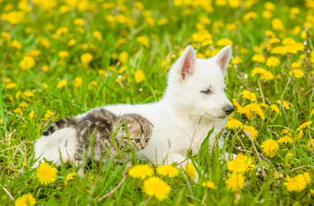 cat and dog lying together on a dandelion field.