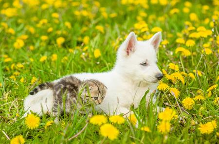 gato y perro acostados juntos en un campo de diente de león.