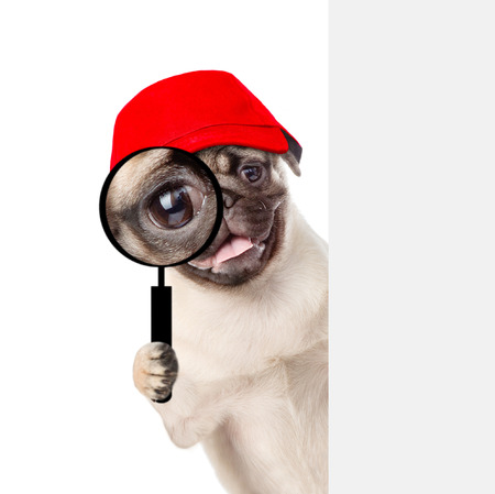 Funny puppy in red cap looks through a magnifying lens. Isolated on white background. Stock Photo