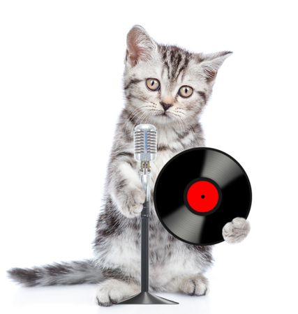 Kitten holds a vinyl record and  retro microphone . Isolated on white background. Imagens