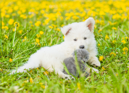 Kitten and puppy lying together on summer grass.