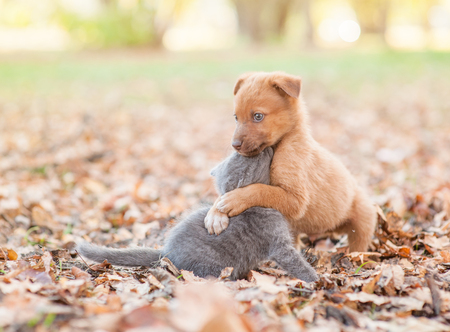 homeless puppy hugging a sad kitten on autumn leaves.