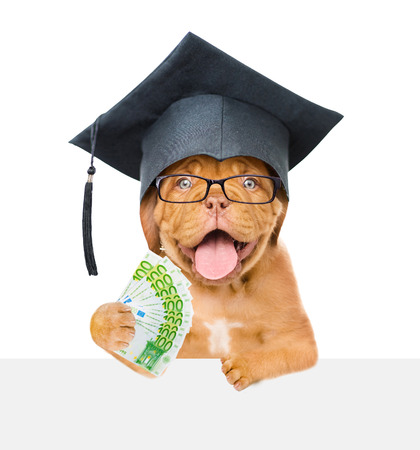 Graduated dog with money over white banner. isolated on white background.