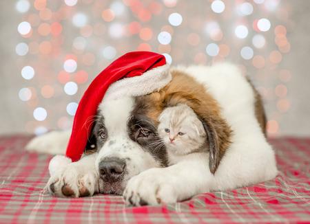 Saint Bernard puppy in Christmas hat hugs a kitten.