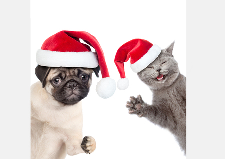 Cat and Dog with red christmas hats peeking behind empty white board and looking at camera. isolated on white background.