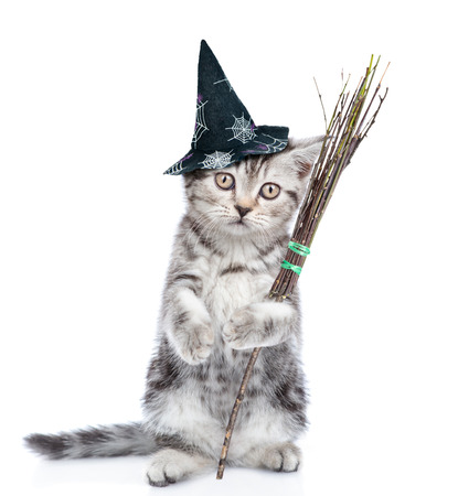 Cat in hat for halloween holding witches broom stick. isolated on white background. 스톡 콘텐츠