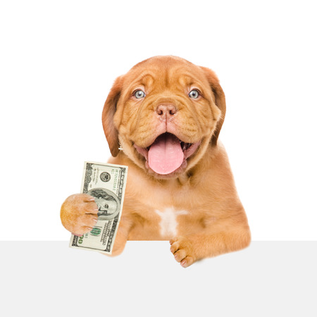 Dog peeking from behind empty board and holding dollars. isolated on white background.