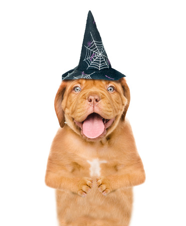 Puppy with hat for halloween. isolated on white background.
