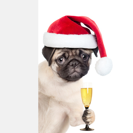 Puppy in red christmas hat holding glass of champagne and peeking behind white banner. isolated on white background.