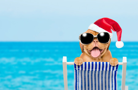 5a9b1113 Happy puppy with red christmas hat and sunglasses in a deck chair. Empty  space for