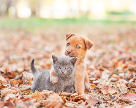 homeless puppy hugging a sad kitten on autumn leaves.