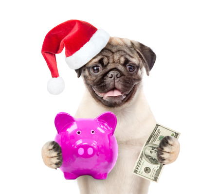 Funny puppy in red christmas hat with piggy bank and dollars in the paws. isolated on white background.