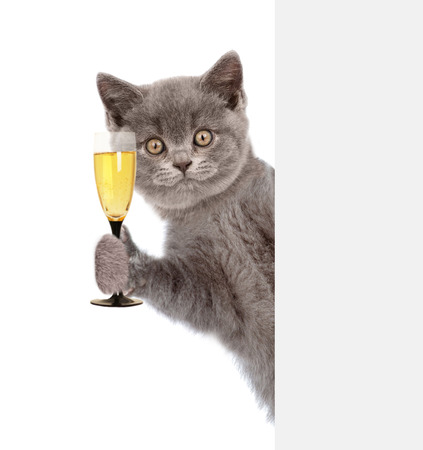 Cat holding glass of champagne behind white banner. isolated on white background.