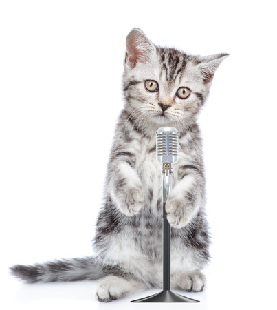 Kitten singing with microphone a karaoke song. isolated on white background.