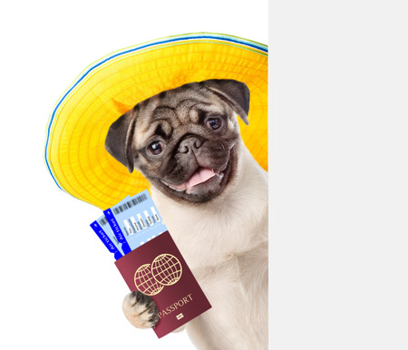 Funny puppy with summer hat holds airline tickets and passport behind white banner. isolated on white background.