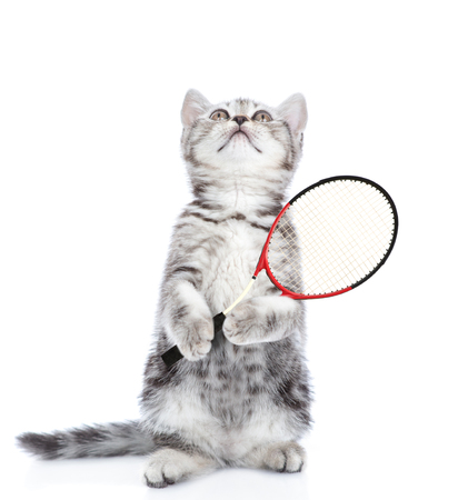 Cute kitten with tennis racket looking up. isolated on white background.