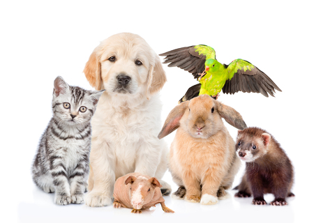 Group of pets together in front view. Isolated on white background. 版權商用圖片