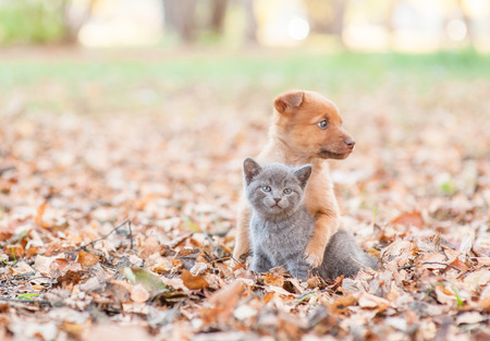 homeless puppy hugging a sad kitten on autumn leaves. Empty space for text. Stock Photo