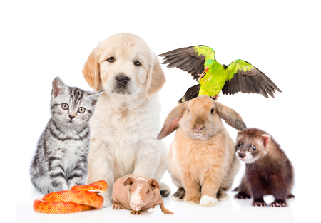 Group of pets together in front view. Isolated on white background. Standard-Bild